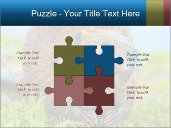 Wild Nutria PowerPoint Template - Slide 43