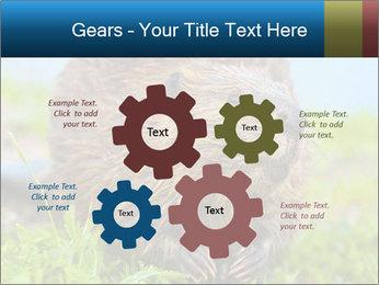 Wild Nutria PowerPoint Templates - Slide 47
