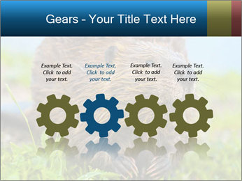 Wild Nutria PowerPoint Templates - Slide 48