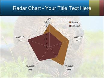 Wild Nutria PowerPoint Templates - Slide 51