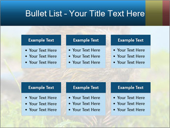 Wild Nutria PowerPoint Templates - Slide 56