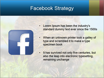 Wild Nutria PowerPoint Templates - Slide 6