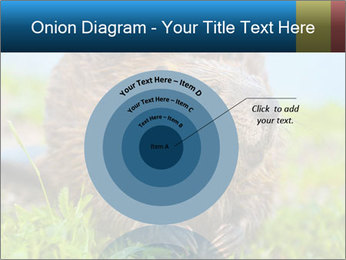 Wild Nutria PowerPoint Template - Slide 61