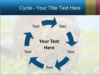 Wild Nutria PowerPoint Template - Slide 62