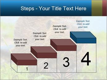 Wild Nutria PowerPoint Template - Slide 64