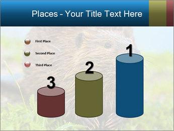 Wild Nutria PowerPoint Templates - Slide 65