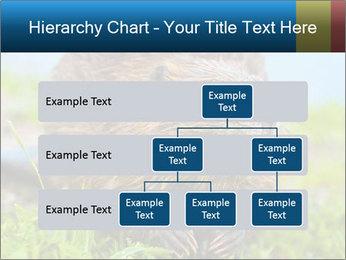 Wild Nutria PowerPoint Template - Slide 67