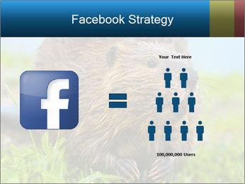Wild Nutria PowerPoint Template - Slide 7