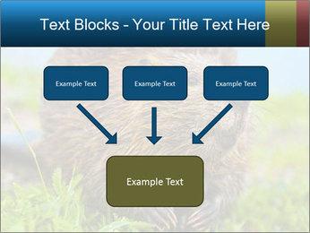 Wild Nutria PowerPoint Template - Slide 70