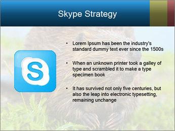 Wild Nutria PowerPoint Templates - Slide 8