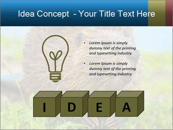 Wild Nutria PowerPoint Template - Slide 80