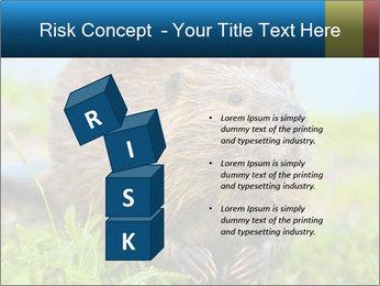 Wild Nutria PowerPoint Templates - Slide 81