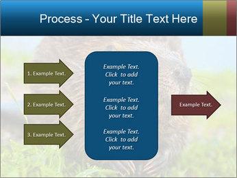 Wild Nutria PowerPoint Template - Slide 85
