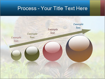 Wild Nutria PowerPoint Templates - Slide 87