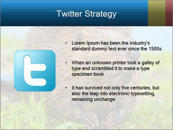 Wild Nutria PowerPoint Template - Slide 9