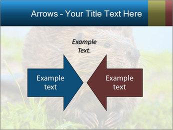 Wild Nutria PowerPoint Templates - Slide 90