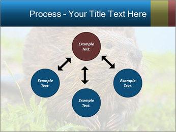 Wild Nutria PowerPoint Template - Slide 91