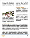 0000090285 Word Templates - Page 4