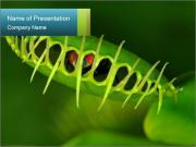 Exotic Plant PowerPoint Template