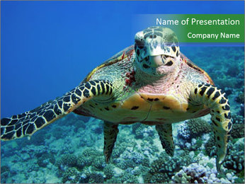 Reef And Turtle PowerPoint Template - Slide 1