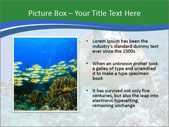 Reef And Turtle PowerPoint Template - Slide 13
