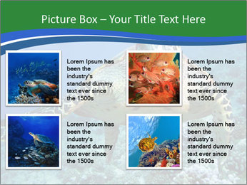 Reef And Turtle PowerPoint Template - Slide 14
