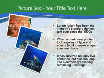 Reef And Turtle PowerPoint Template - Slide 17