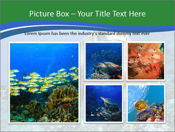 Reef And Turtle PowerPoint Template - Slide 19