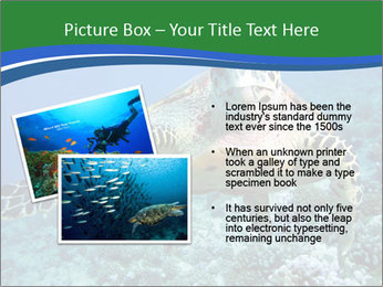 Reef And Turtle PowerPoint Template - Slide 20
