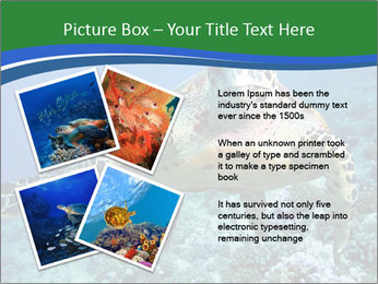 Reef And Turtle PowerPoint Template - Slide 23