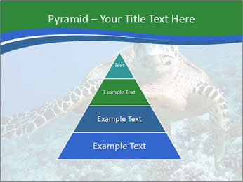 Reef And Turtle PowerPoint Template - Slide 30