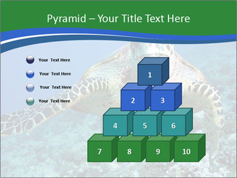 Reef And Turtle PowerPoint Template - Slide 31