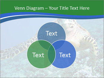 Reef And Turtle PowerPoint Template - Slide 33