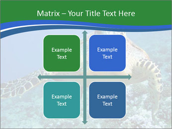 Reef And Turtle PowerPoint Template - Slide 37