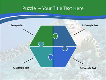 Reef And Turtle PowerPoint Template - Slide 40