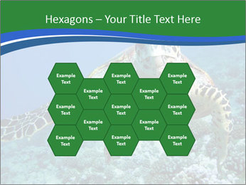 Reef And Turtle PowerPoint Template - Slide 44
