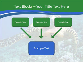 Reef And Turtle PowerPoint Template - Slide 70