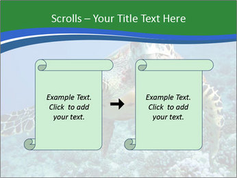 Reef And Turtle PowerPoint Template - Slide 74