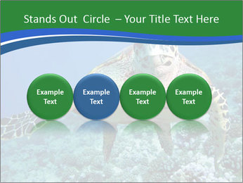 Reef And Turtle PowerPoint Template - Slide 76
