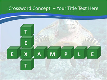 Reef And Turtle PowerPoint Template - Slide 82