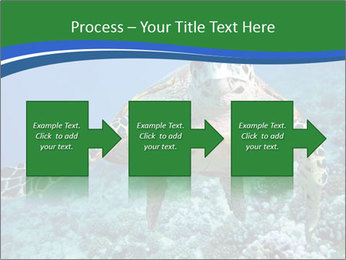 Reef And Turtle PowerPoint Template - Slide 88