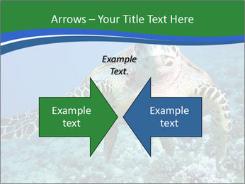 Reef And Turtle PowerPoint Template - Slide 90