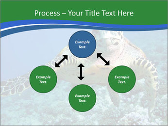 Reef And Turtle PowerPoint Template - Slide 91