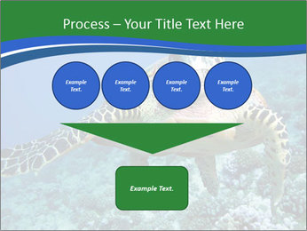 Reef And Turtle PowerPoint Template - Slide 93