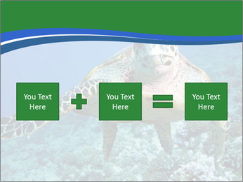 Reef And Turtle PowerPoint Template - Slide 95