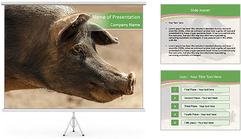 Big Pig PowerPoint Template