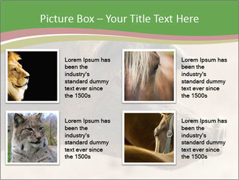 Big Pig PowerPoint Templates - Slide 14