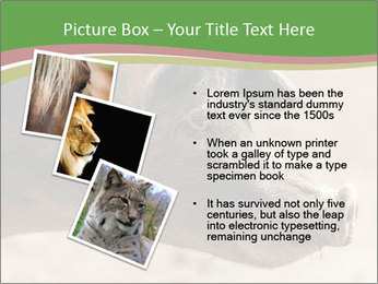 Big Pig PowerPoint Templates - Slide 17