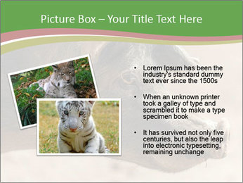 Big Pig PowerPoint Templates - Slide 20