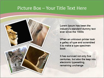 Big Pig PowerPoint Templates - Slide 23